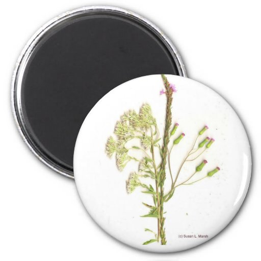 Weeds , a scan of Florida wildflowers 2 Inch Round Magnet