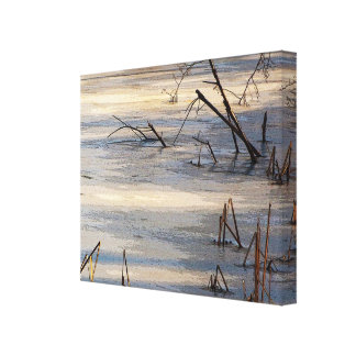 Weeds in Ice Stretched Canvas Print