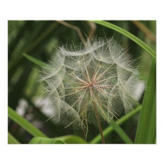 Weeds in my Flower Bed Photo Art