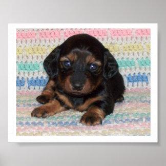 Weenie Dog Poster