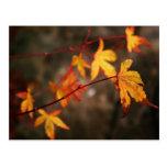 Weeping Autumn Postcard