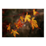 Weeping Autumn Poster Print