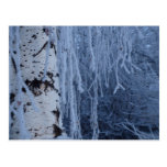 Weeping Birch in Winter Post Cards