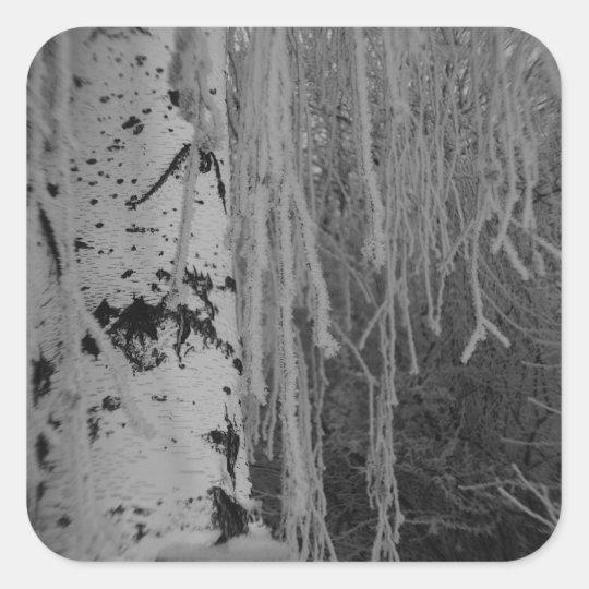 Weeping Birch in Winter Square Sticker