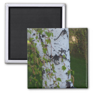 Weeping Birch Tree 2 Inch Square Magnet