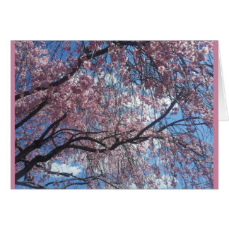 Weeping Cherry Against a Blue Sky Card