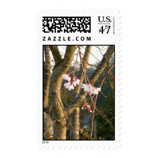 Weeping Cherry Portrait Postage