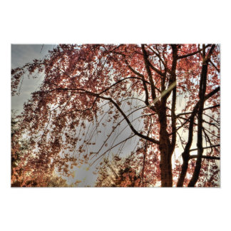 Weeping cherry tree blossoming, Ohio Photographic Print