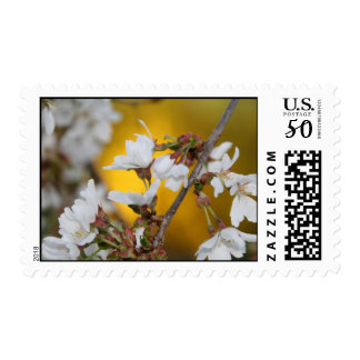 Weeping Cherry Tree Blossoms Stamp