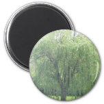 Weeping WIllow 2 Inch Round Magnet