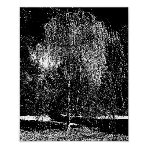 Weeping Willow Canvas Posters