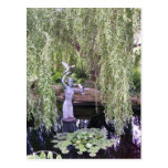 Weeping Willow Post Cards