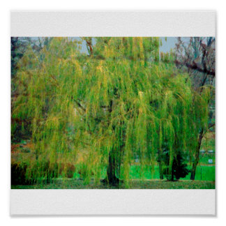 Weeping Willow Poster/Print