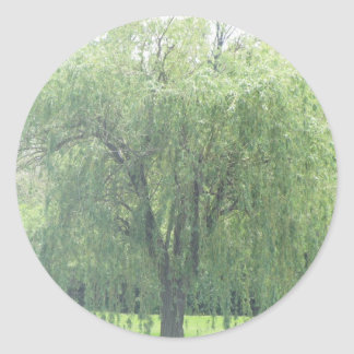 Weeping WIllow Round Stickers