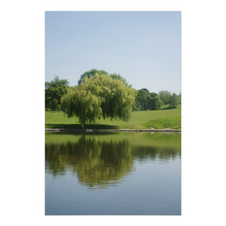 Weeping willow tree posters.