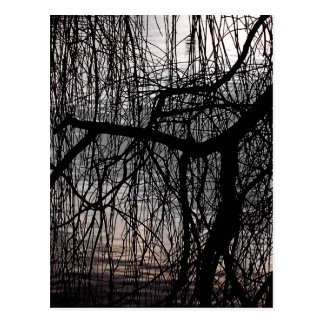 WEEPING WILLOW TREES POSTCARD