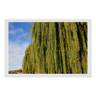 Weeping Willow with Blue Sky Poster