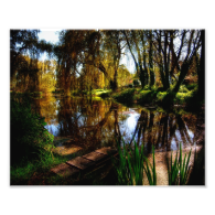 Weeping Willows Photograph