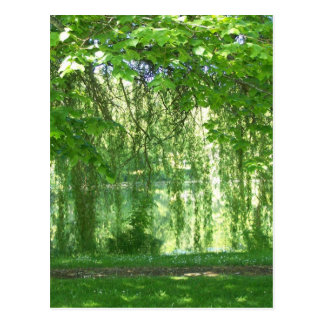 Weeping Willows with Pond Postcard