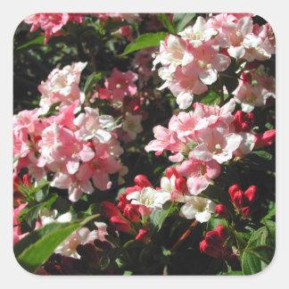 Weigela. Pretty Pink Flowers. Square Sticker