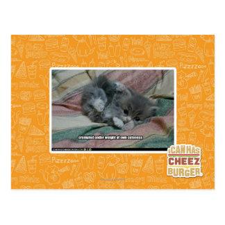 Weight of own cuteness postcard