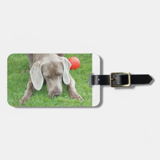 weim w butterfly.png bag tag