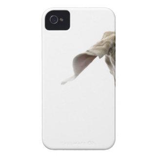 Weimaraner 2 iPhone 4 cover