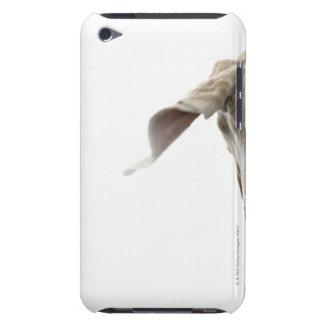Weimaraner 2 iPod touch case