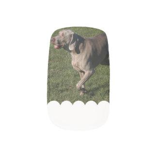 weimaraner-6 minx® nail wraps