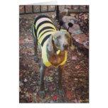 Weimaraner Bumblebee Cards