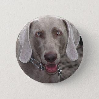 Weimaraner Button