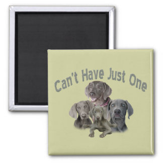 Weimaraner Can't Have Just One Magnet