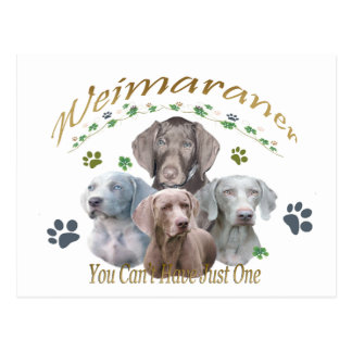 Weimaraner Can't Have Just One Postcard