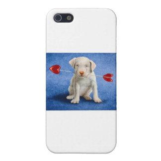 Weimaraner Case For iPhone SE/5/5s