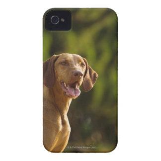 Weimaraner Case-Mate iPhone 4 Case