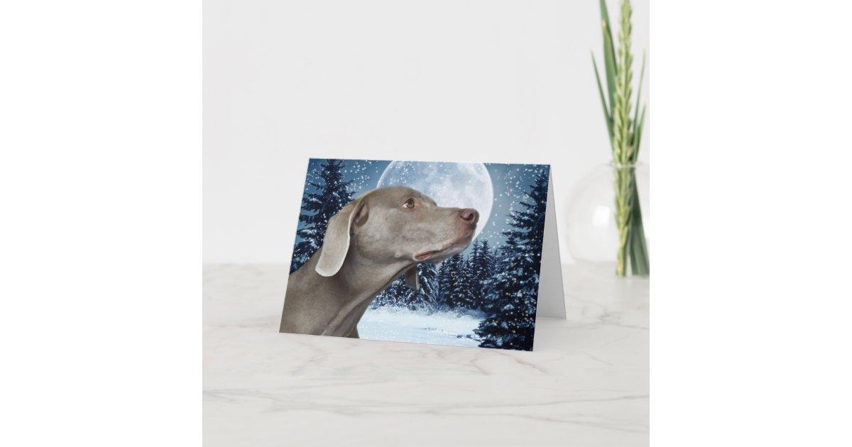 Weimaraner Christmas Card | Zazzle.com
