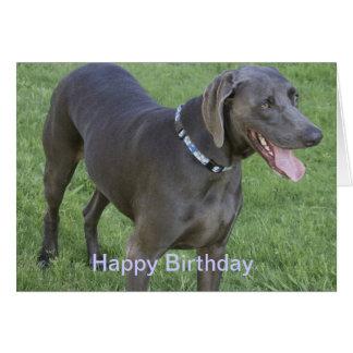 Weimaraner Dog Birthday Card