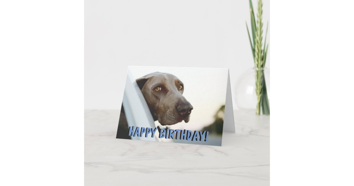Weimaraner dog birthday card | Zazzle.com