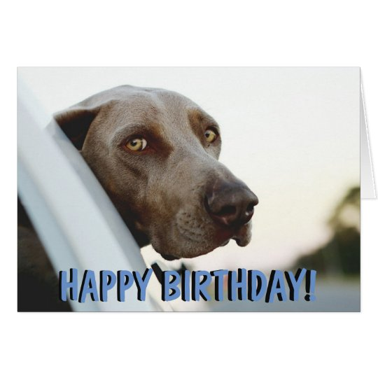Weimaraner dog birthday card – Dog Birthday Card
