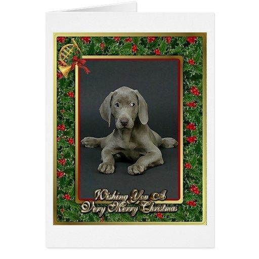 Weimaraner Christmas Cards