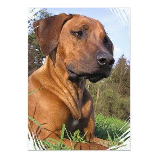 "Weimaraner Dog Photo Invitation 5"" X 7"" Invitation Card"