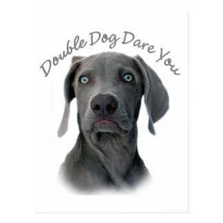 Weimaraner Double Dog Dare You Postcard