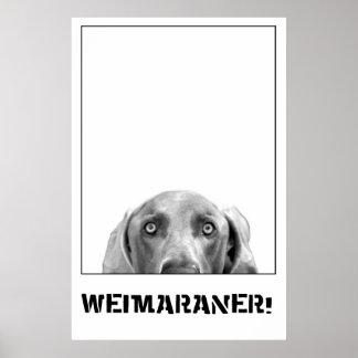 Weimaraner en un poster de la caja