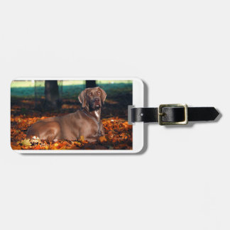 weimaraner-fall leaves.png bag tag
