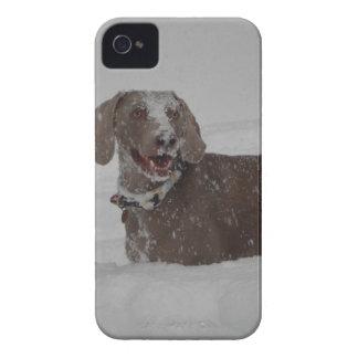 Weimaraner in deep snow iPhone 4 case