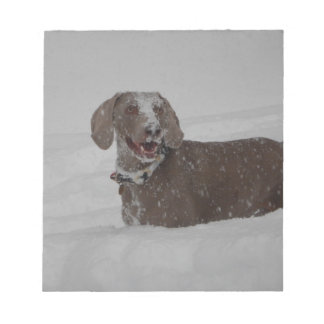 Weimaraner in deep snow scratch pads