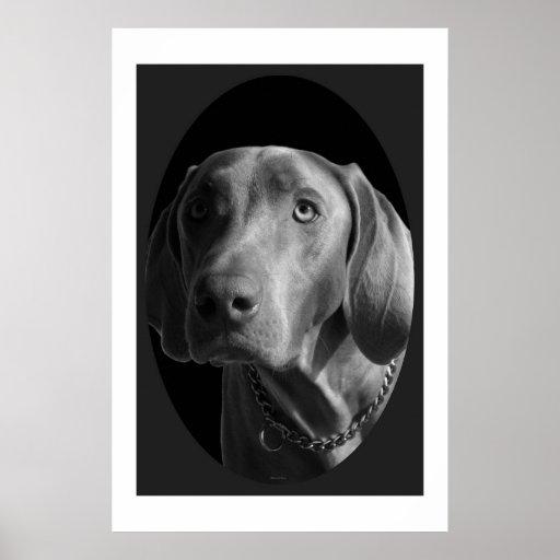 Weimaraner – Intense (Black & White) Poster