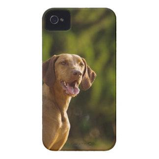 Weimaraner iPhone 4 Cases