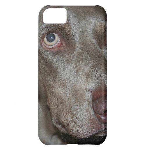 Weimaraner iPhone 5C Cases