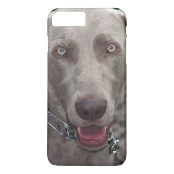 Weimaraner iPhone 7 Case